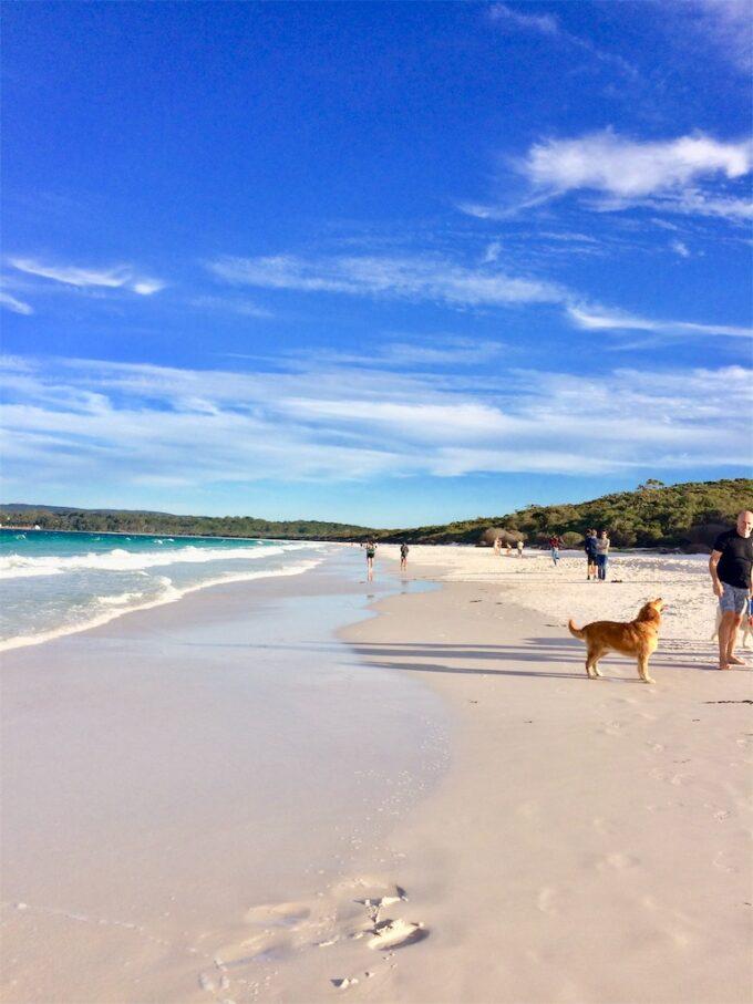 ハイアムズビーチの白い砂浜で犬が散歩している写真