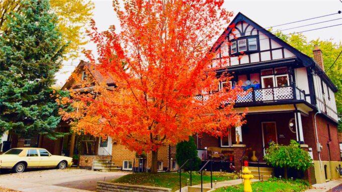 紅葉したメープルの木